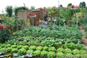 jardins_familiaux_1